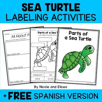 Vocabulary Activity - Parts of a Sea Turtle
