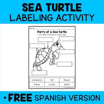 Parts of a Sea Turtle Activity
