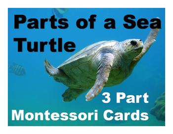 Parts of a Sea Turtle Montessori Three Part Vocabulary Cards - color & blackline