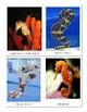 Parts of a Seahorse - Montessori-Three Part Cards