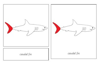 Parts of a Shark Pack