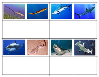 Parts of a Shark and Popular Sharks Mini Match-up Cards