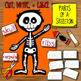 Parts of a Skeleton Craft