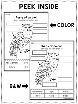 Vocabulary Activity - Parts of a Snowy Owl