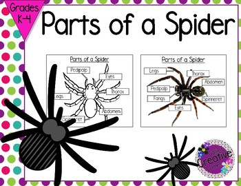 Parts of a Spider