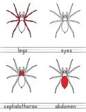 Parts of a Spider - 3-Part Cards, Montessori