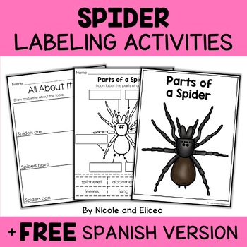 Vocabulary Activity - Parts of a Spider