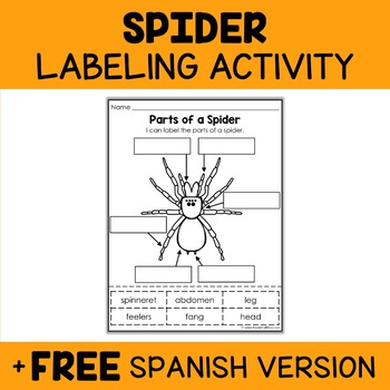 Parts of a Spider Activity