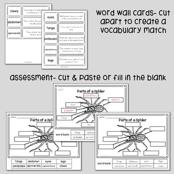 Parts of a Spider Labeling Activities