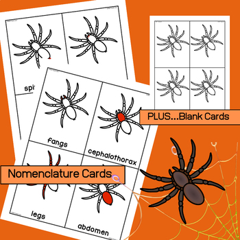 Parts of a Spider - Poster, Labeling Worksheets & Nomenclature Cards