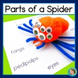 Parts of a Spider: worksheets, song, poster and activity