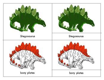 Parts of a  Stegosaurus-Three Part Cards