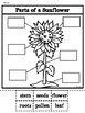 Parts of a Sunflower-Bilingual