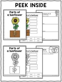 Vocabulary Activity - Parts of a Sunflower