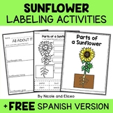 Parts of a Sunflower Activities
