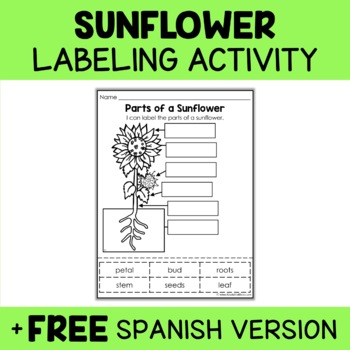 Parts of a Sunflower Activity