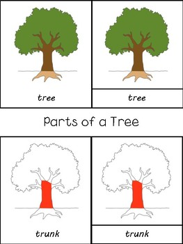 Parts of a Tree Montessori 3 Part Cards