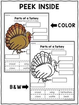 Vocabulary Activity - Parts of a Turkey