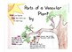 Science - Parts of a Vascular Plant