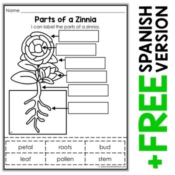 Vocabulary Activity - Parts of a Zinnia Plant