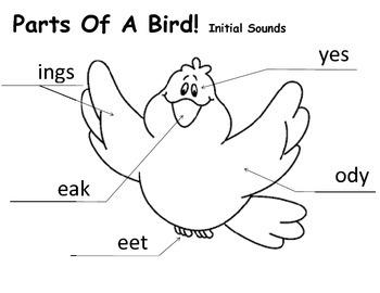 Parts of a bird!