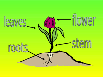Parts of a flower