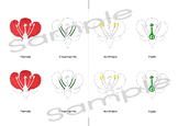 Parts of a flower | 3 part Montessori cards