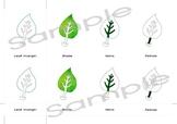 Parts of a leaf | 3 part Montessori cards