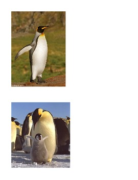 Parts of a penguin lesson plan with extension activities