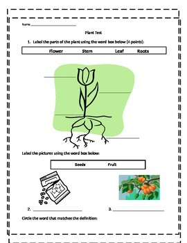 Parts of a plant Test
