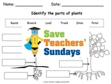 Parts of a plant and parts of a tree Lesson plan and Worksheet