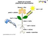 Parts of a plant bilingual diagram