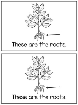 Parts Of A Plant Reader - Differentiated (read, trace, write, color)