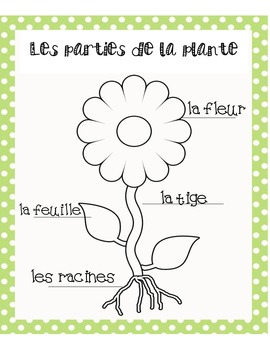 Parts of a plante- Grade 1 French Immersion