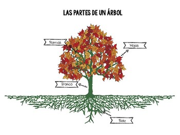 parts of a tree las partes de un arbol activity in spanish and english