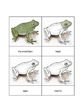 Parts of an Amphibian