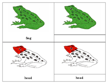 Parts of an Amphibian - Three Part Cards : Frog