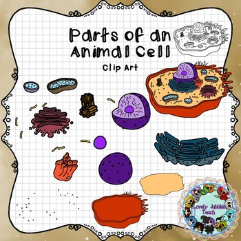 Parts of an Animal Cell: Clip Art