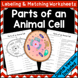 Parts of an Animal Cell - Labeling & Matching | Printable