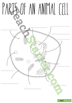 Parts of an Animal Cell Poster and Worksheets
