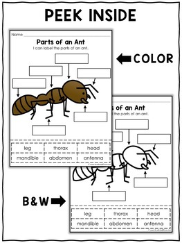 Vocabulary Activity - Parts of an Ant