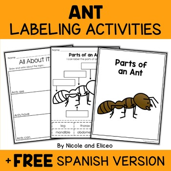 Parts of an Ant Activities