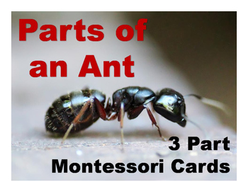 Parts of an Ant Montessori Three Part Vocabulary Cards - color and blackline