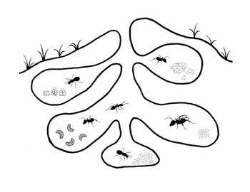 Parts of an Anthill