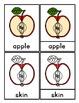 Parts of an Apple: 3 Part Cards, Definition Booklet, & Bon