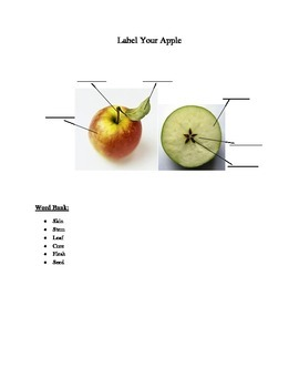 Parts of an Apple Quiz
