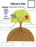Parts of an Apple Tree