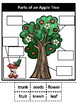 Parts of an Apple Tree-Bilingual