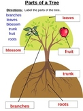 Parts of an Apple Tree (PowerPoint)