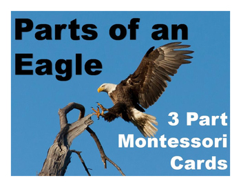 Parts of an Eagle Montessori Three Part Vocabulary Cards color & blackline